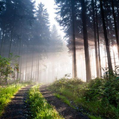 Wald des Schiefergebirges